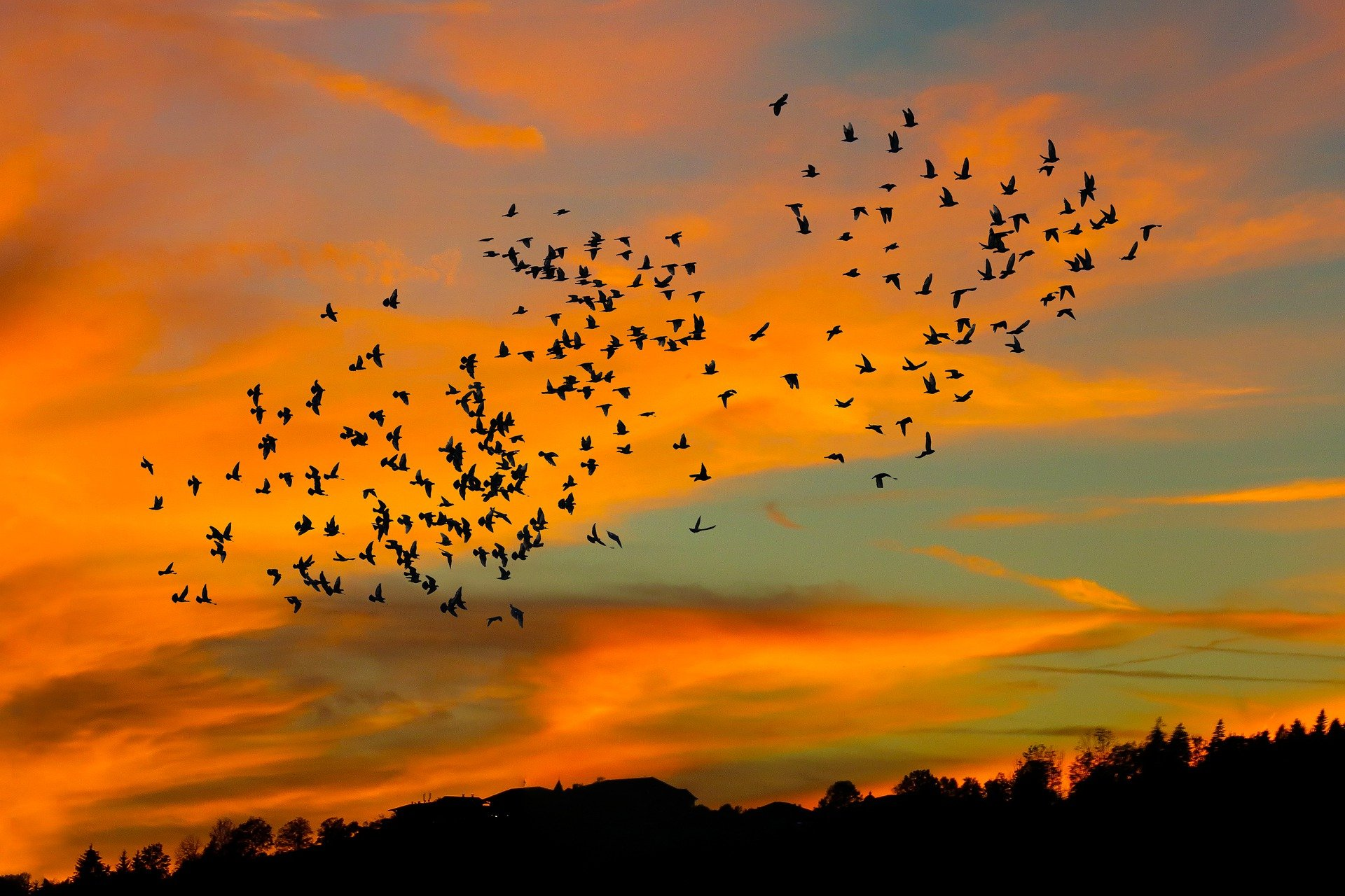 Autumn walks migrating birds