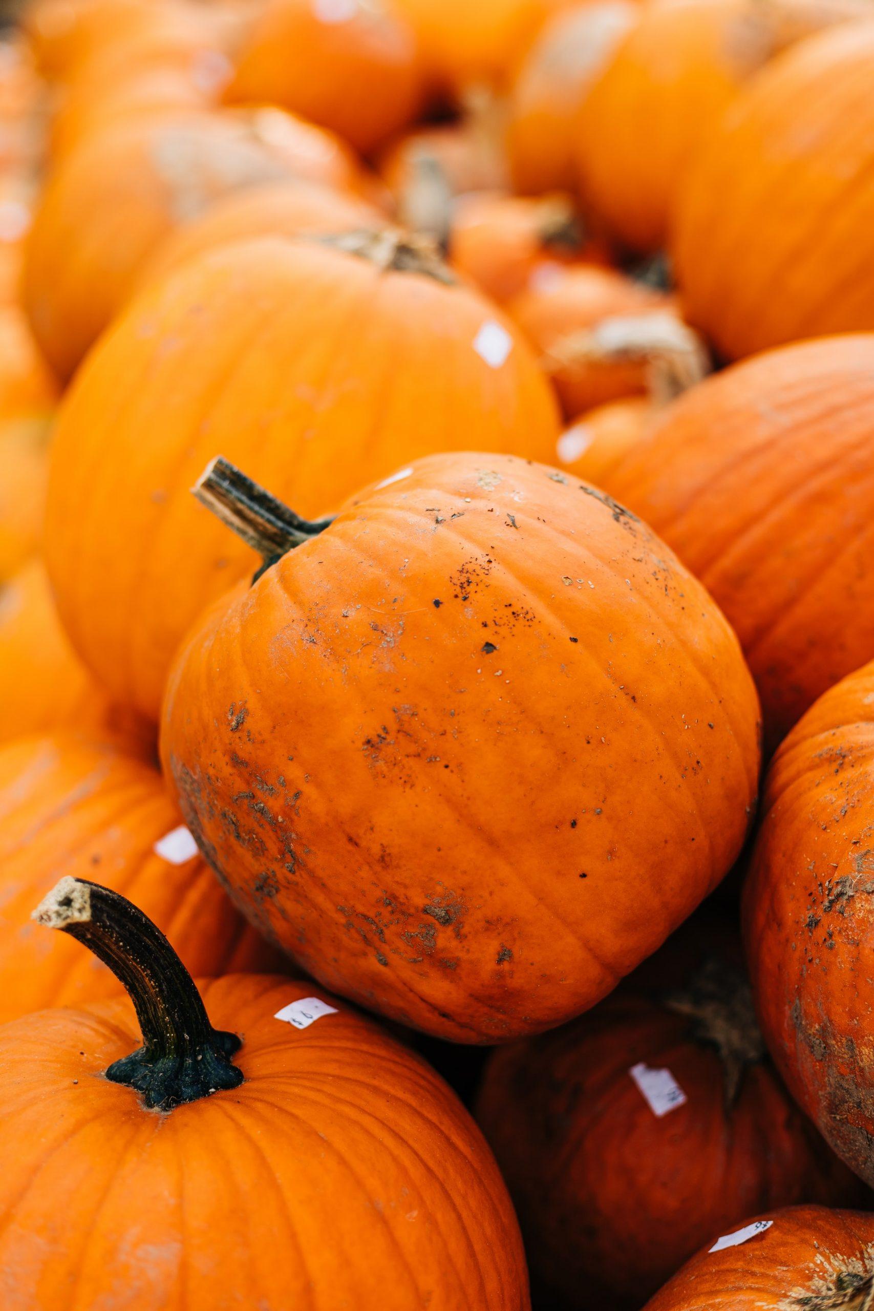 Autumn walks pumpkin patch